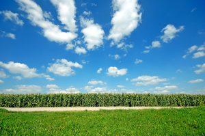 De acuerdo con Rodrigo Besoy las Oficinas Familiares apuntan ahora a inversiones en campos agrícolas.