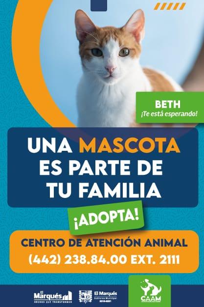 Centro de atención animal