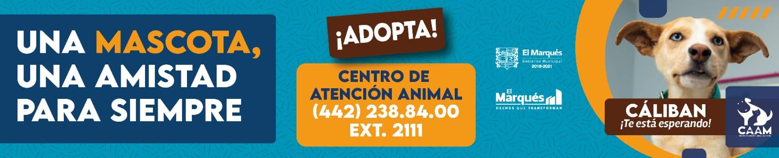 Centro ade atención animal